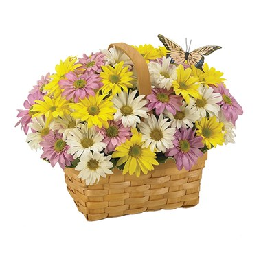 Daisy a Day Easter Basket (BF137-11KM)